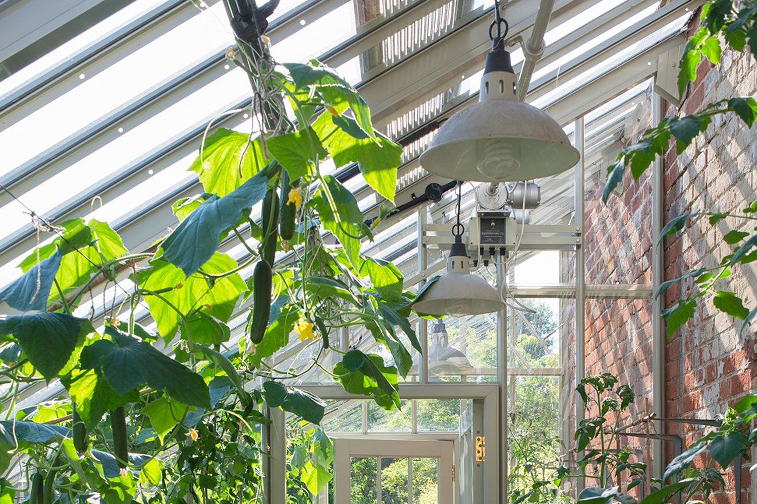 Greenhouse lights in a lean-to glasshouse (Alitex greenhouse accessories)