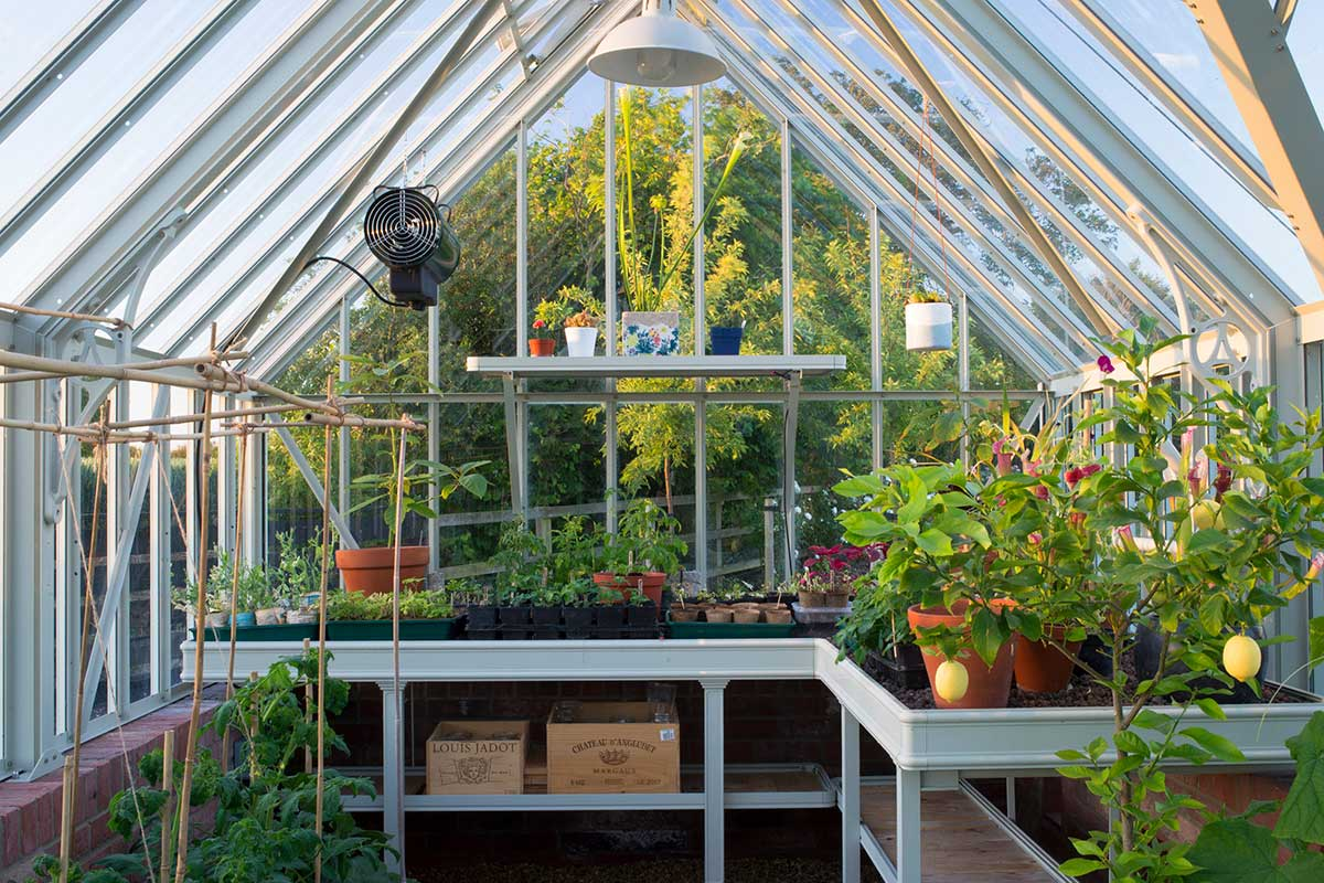 Greenhouse layout inspiration from Alitex